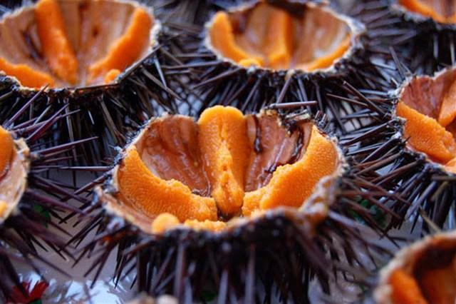 Sea urchins Favignana